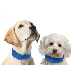 Collier rafraîchissant pour chien